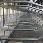 More about cow cubicles