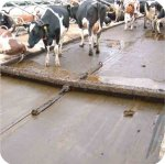 Rubber cow matting in cubicle alley