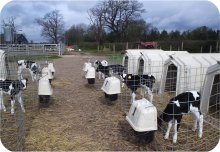 Individual Calf Hutch with Feedsaver