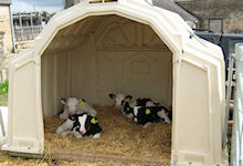 MultiMax Group Calf Hutch