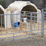 More about group calf hutches