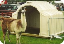 Shelter for Alpacas and llamas