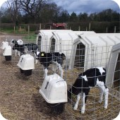 Calf hutch - Calf-Tel Pro hutch with fence and feedsaver