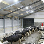 LED Lights for Barns