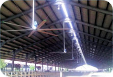 livestock building with fans